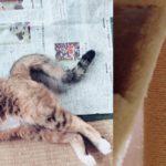 """<span class=""""title"""">【雑談】子猫のデンちゃんの訃報・・。猫の突然死について</span>"""